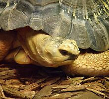 Turtle Strikes a Pose by Tanya Keefe