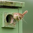 At the Nestbox by Daniel  Parent