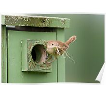 At the Nestbox Poster