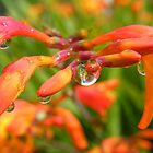 raindrops by Joyce Knorz