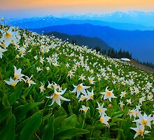 Flower Avalanche by Inge Johnsson