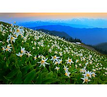 Flower Avalanche Photographic Print
