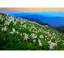 Flower Avalanche Photographic Print