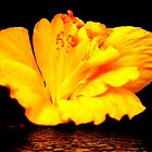 Golden Hibiscus Reflection by Elaine Teague