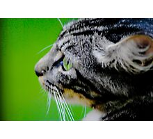 GREEN is in the eye of the beholder Photographic Print