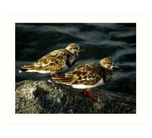 Avian Beauty ~ Part Nineteen Art Print