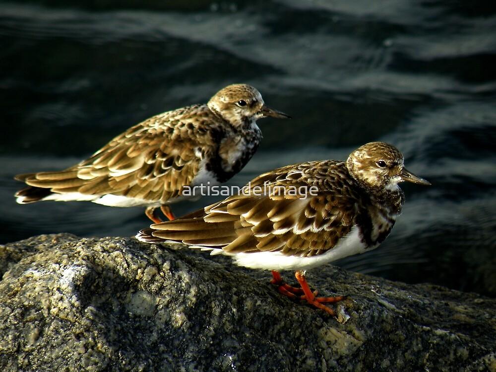 Avian Beauty ~ Part Nineteen by artisandelimage