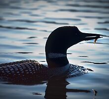 Loon with Fish by Laura Cooper