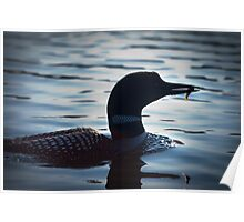 Loon with Fish Poster