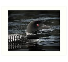Loon in Algonquin Park Art Print