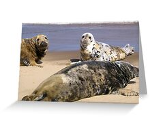 Donna Nook Seal Family Greeting Card
