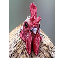 Ruler of his Roost Photographic Print
