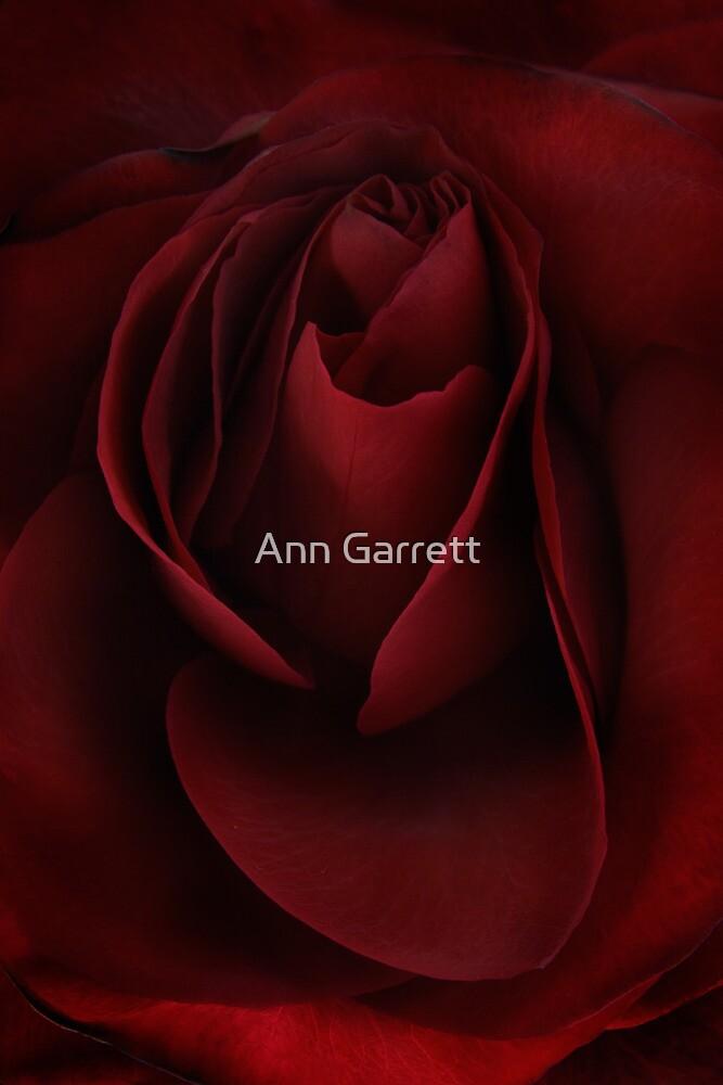 Sad Rose by Ann Garrett