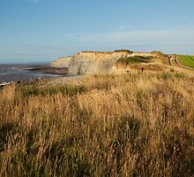 Clifftop at Kilve Beach by kernuak