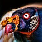 King Vulture by Tarrby