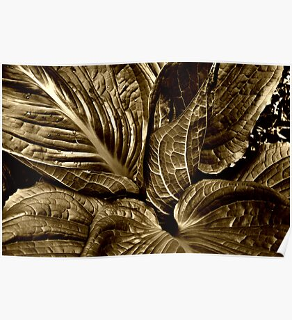 Skunk Cabbage - Sepia Poster