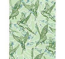 Budgie Pattern Photographic Print