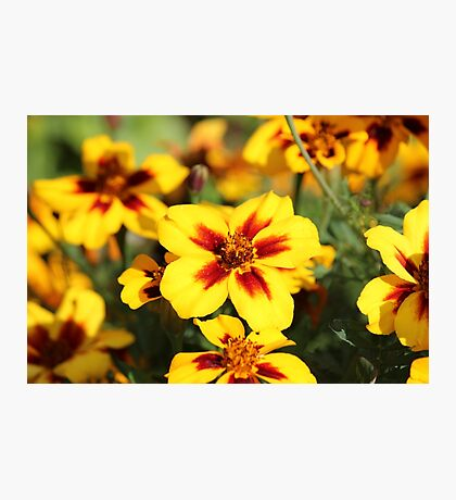Yellow & Red Photographic Print