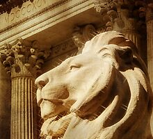 Lion in the Sun by JonWoodhams