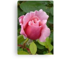 Simply a Rose Canvas Print
