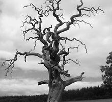 Gnarled Tree... by EmilyMead