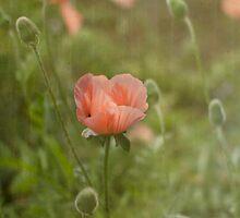 Peach Dream by Rebecca Cozart