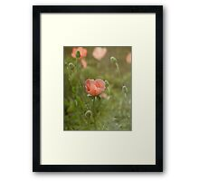 Peach Dream Framed Print