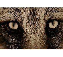 Eyes Photographic Print