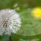 Dandelion Clock by buttonpresser