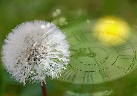 Dandelion Clock by buttonpresser