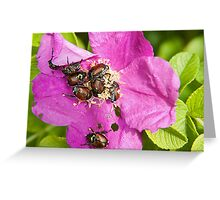 And a bug tussle, a rose Greeting Card