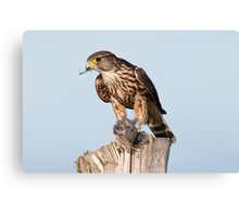 Merlin with catch Canvas Print