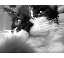 Noses Photographic Print