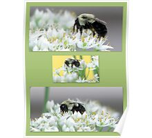 Bumble Bee Collage Poster