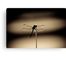 Insect in the shadows Canvas Print