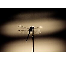 Insect in the shadows Photographic Print