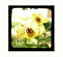 Bloomed Roses Art Print