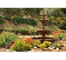 Cactus Fountain Photographic Print
