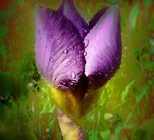Raindrops on Purple Irises #9 by Dawna Morton
