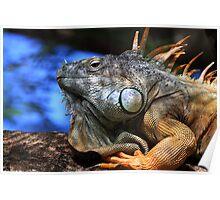 Chameleon Iguana Poster