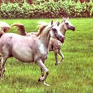 Arabians at Gallop by WTBird