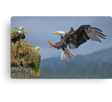 LOOK OUT! Canvas Print