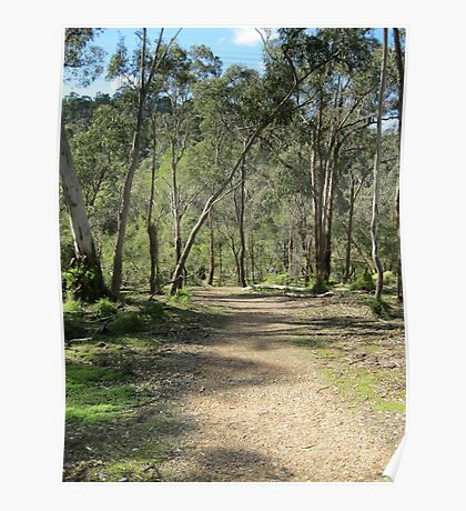 Currawong Track Poster