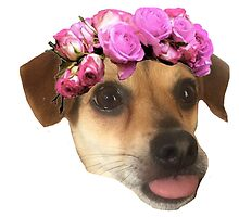 Flower Crown Calica by lettersBheather
