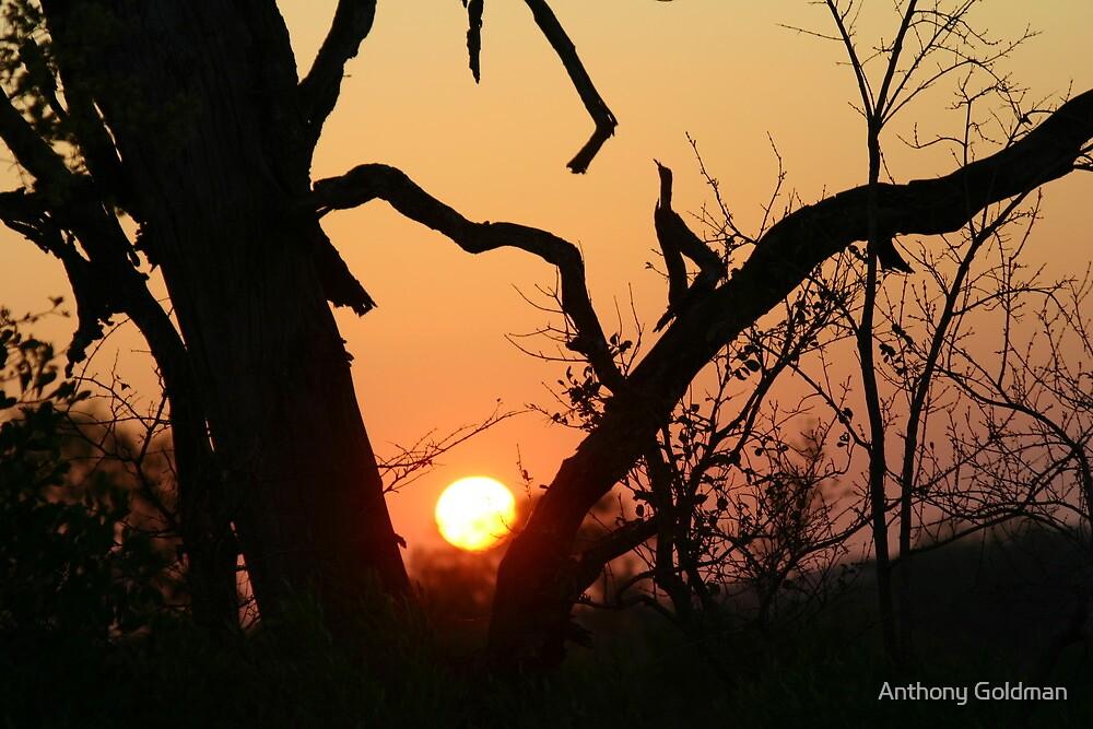 Sunrise in sabi sands by jozi1