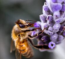 Sweet Bee by Cathy Middleton