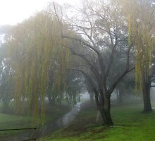 Willow tree in the fog. by Marilyn Baldey