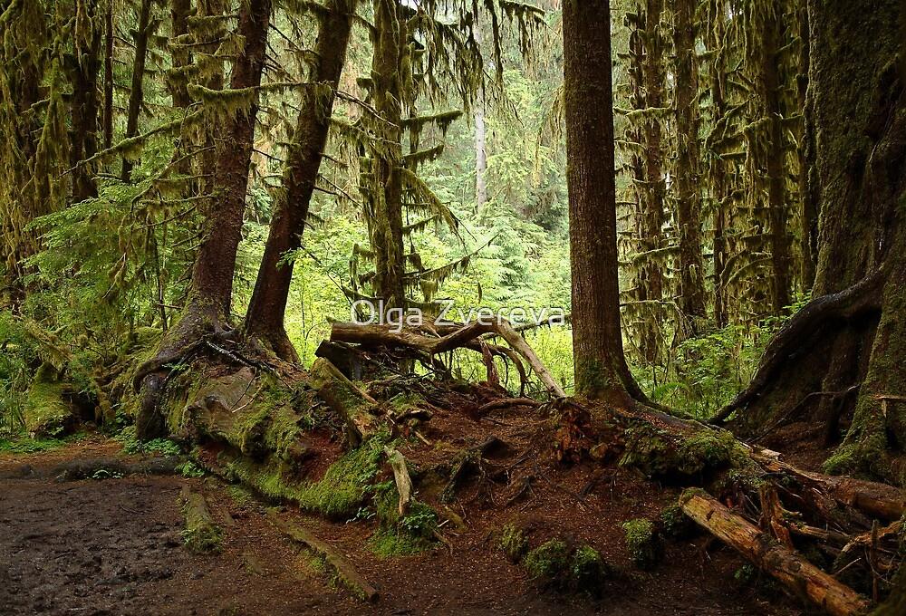 Hoh Rain Forest by Olga Zvereva