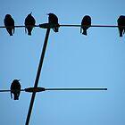 Six little dicky birds by Dee Boylan