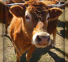 Nice Mr. Bull... It's Ok....It's Just a Camera!! by Debbie Robbins